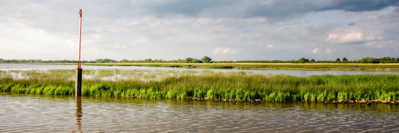 tidenkieker-verein-zur-foerderung-von-naturerlebnissen-schilfparadiese-panorama
