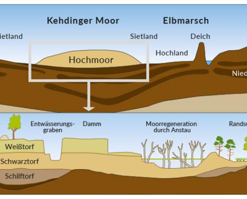 Verein-zur-Foerderung-von-Naturerlebnissen-Kehdinger-Moor-Querschnit