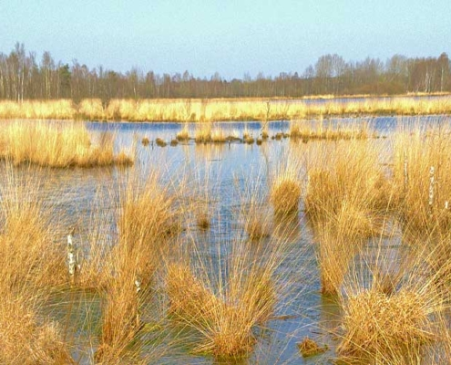 Verein-zur-Foerderung-von-Naturerlebnissen-moor-vor-4000-jahren