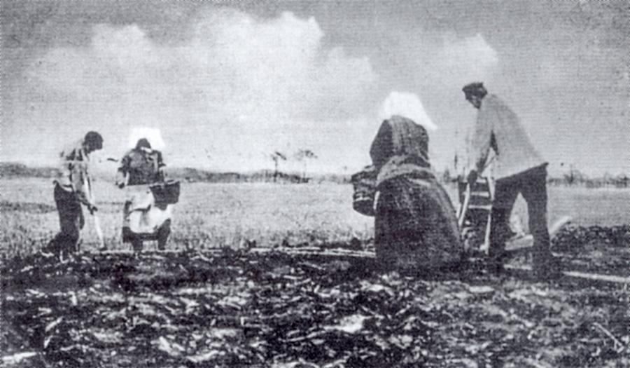 verein-naturerlebnisse-moorgeschichte-kartoffelanbau